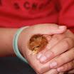 2012 » 6/7T Chickens