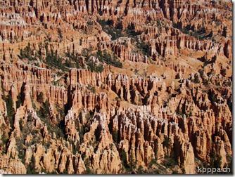 110831 NP Bryce Canyon (7)