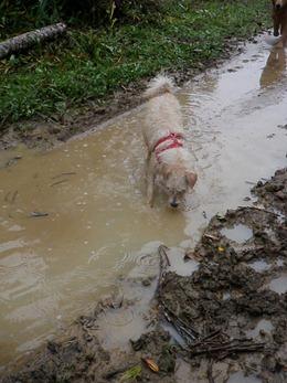 Dogs Trekking 4 (244)
