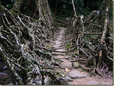 Tree bridge 4