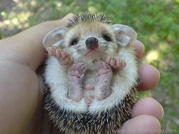 filhotes-de-animais-fotos-cute-cuti-desbaratinando (10)