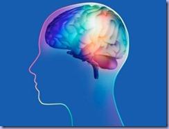 cervello_27
