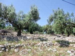 Timeless olives