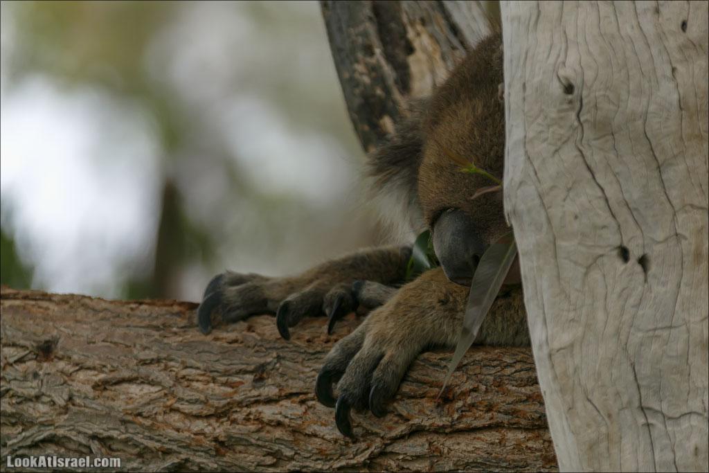 LookAtIsrael.com: В парке Гуру есть не только кенгуру (israel  парк и интересно и полезно галилея братья наши )