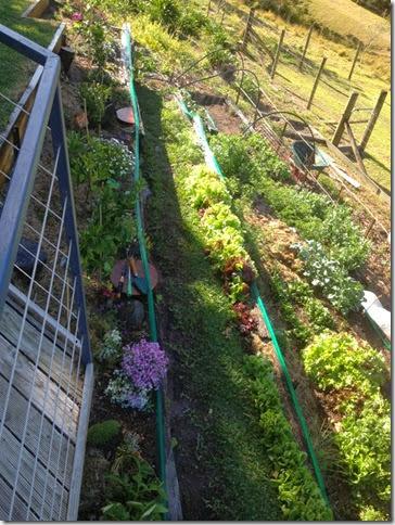 kvd garden
