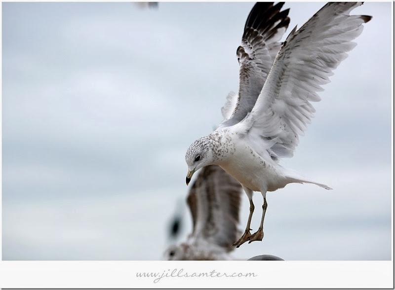 birdflight4