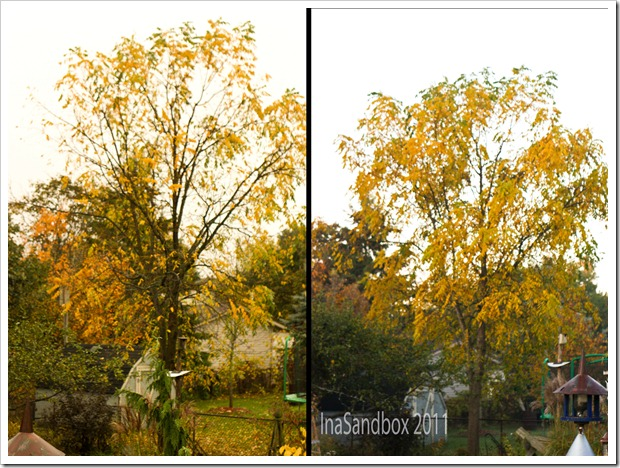 Diptych Walnut Tree
