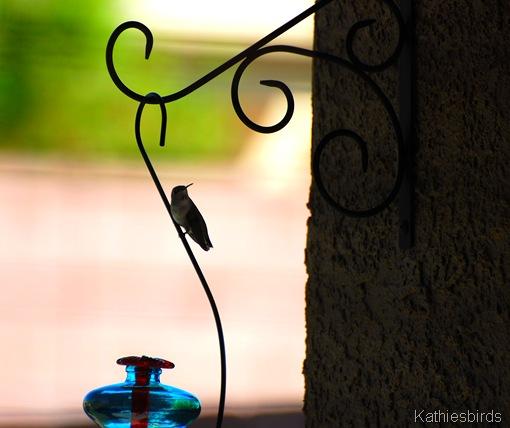 7. hummingbird-kab