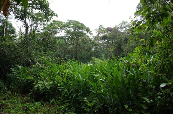 Zone humide. Caçandoca (Ubatuba, SP). 11 février 2012. Photo : J.-M. Gayman