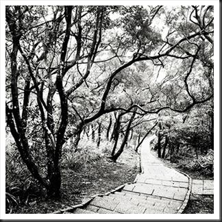 Josef_Hoflehner_Elephant_Hill_Pathway
