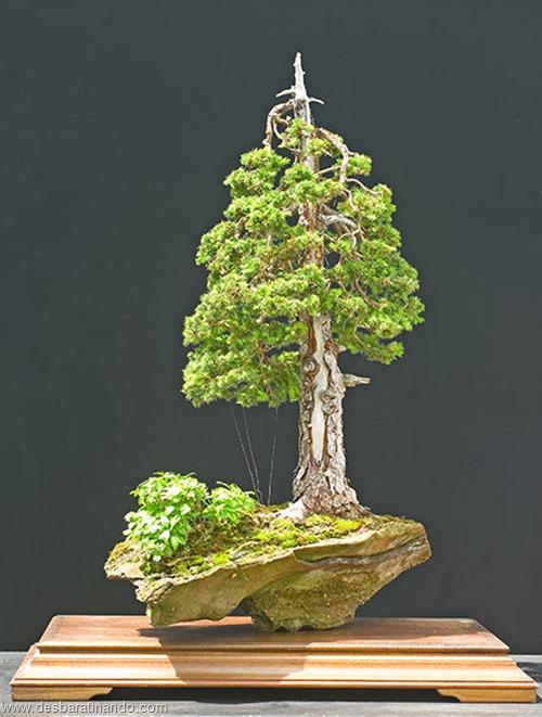 bonsais arvores em miniatura desbaratinando (84)