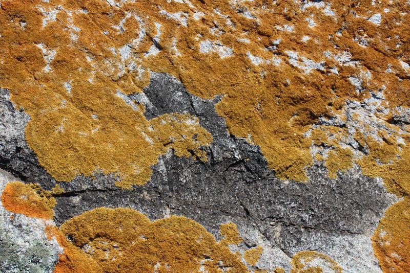 Star Island lichen texture.jpg