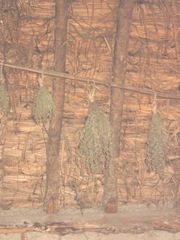Plimoth Plant herbs drying in indian summer lodge