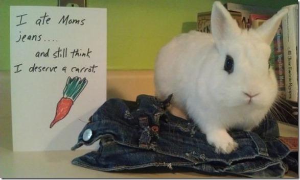 bunny-rabbit-shaming-13