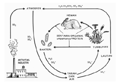 Gambar daur fosfor