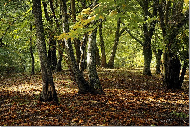 autunno tempo di castagne ferd balbo