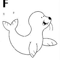 foca.jpg