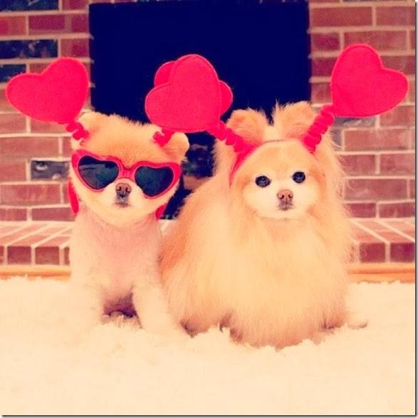 funn-animals-cute-12