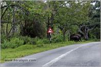 _P6A1746_wild_elephants_mudumalai_bandipur_sanctuary