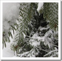 20120113_snow-day-outside_012