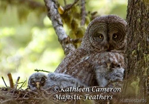 1 ©Kathleen-Cameron-Great-Gray-Owls-