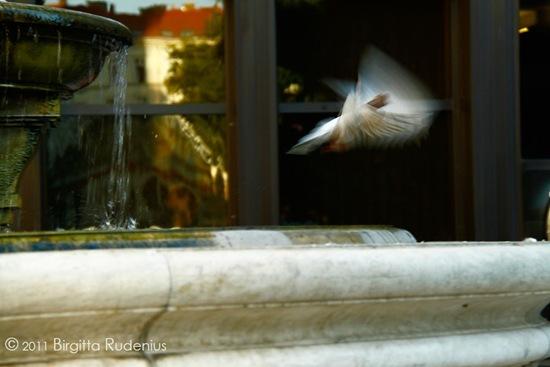 water_20110930_dove