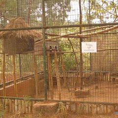 Lemurs Park::IMGP4472