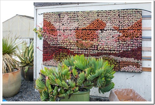 120928_SucculentGardens_wall-panel