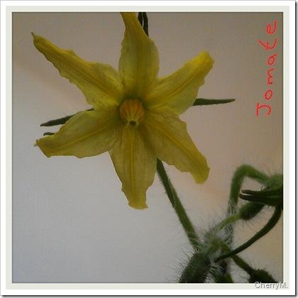 2012-07-16-01-34-29_deco