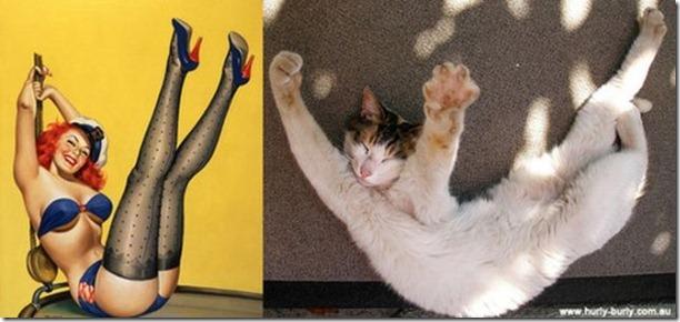 cats-pinup-models-9