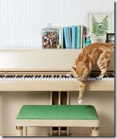 gato pianista blogdeimagenes (9)