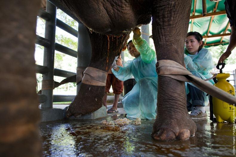 elephant-hospital-9