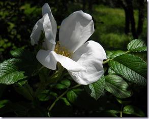 fiori casa nuova 065
