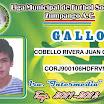 GALLOS 13.jpg