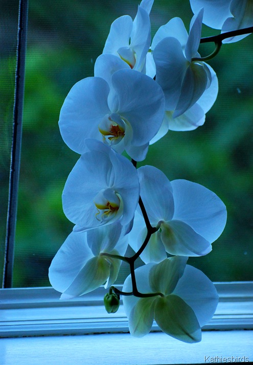 1. orchid-kab