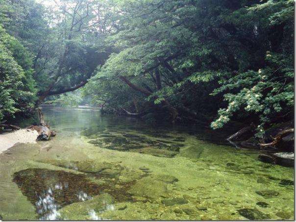 floresta no japão (6)