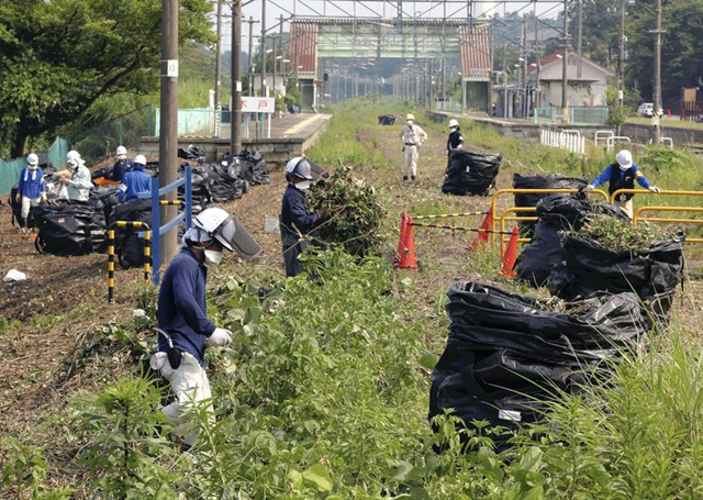 Workers put in radioactive waste discharged from decontamination into bags made of resin in Naraha, Fukushima Prefecture, on 8 August 2013. Photo: The Yomiuri Shimbun
