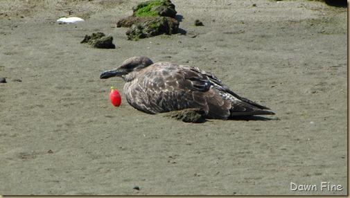 Birding Clamming_026