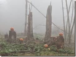 pumpkin shoot 16