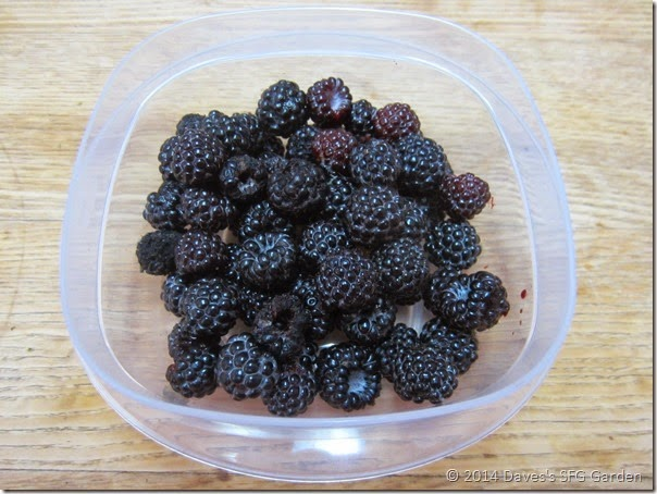 black_raspberries