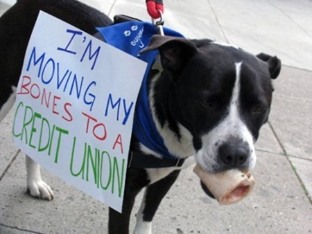 cute-pets-at-occupy-wall-street-02