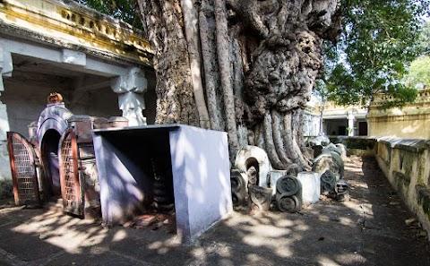 strom Banni a Shivove hady, Sri Kodi Someshwara Swami