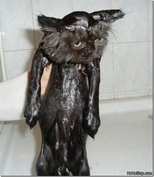 soaking_wet_cat