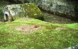 2002.06.11-153.08 chien de prairie