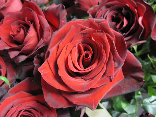 There's nothing better to give on Valentines Day than red roses.