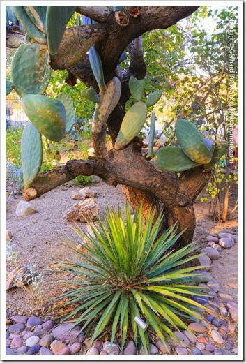 131203_TucsonBotanicalGarden_164
