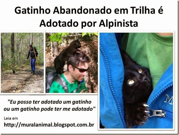 Gatinho Abandonado em Trilha é Adotado por Alpinista
