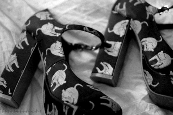 beautiful-black-and-white-cat-cats-cute-Favim.com-286868