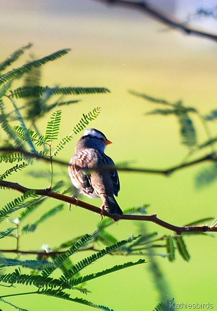15. WC sparrow-kab