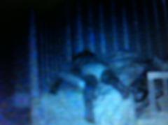 Big Bed 09